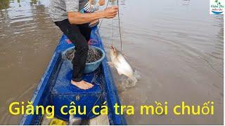 488 | Giăng câu cá tra về Tả Pí Lù | Fishing