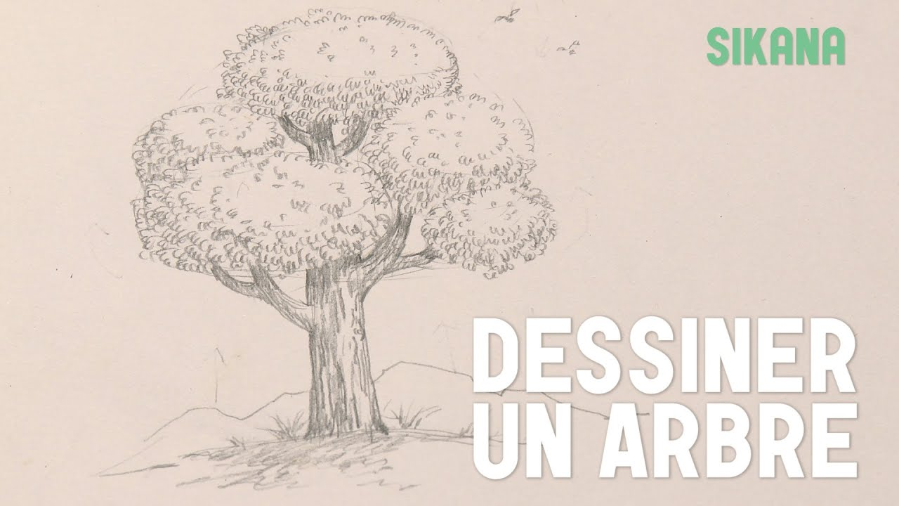 Coloriage Arbre Feuille Qui Tombe.Dessiner Un Arbre Youtube