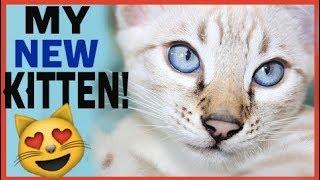 THE CUTEST KITTEN EVER! OMG!