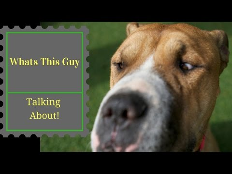 If you struggle with an anti social dog. This will help! 2017