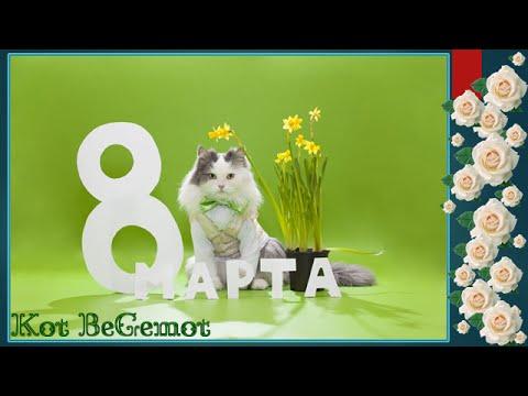 смешные котята смотреть онлайн бесплатно — хорошее