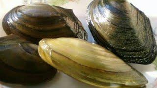 pe filtru antiparazitele se toarnă perlele