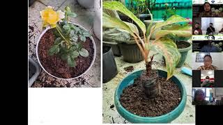 Download Pembibitan vegetatif dan pembuatan pupuk organik