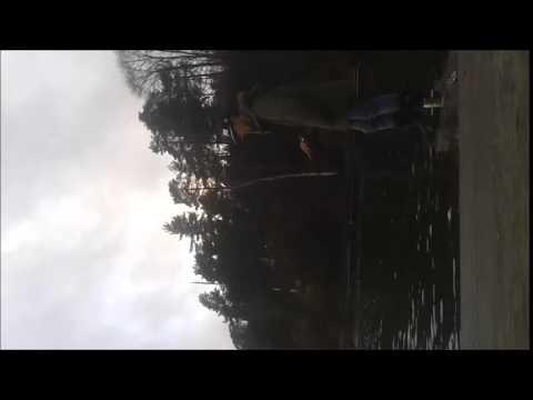 Cod / Torsk Fluefiske i Oslofjord 7 - 12 - 2014
