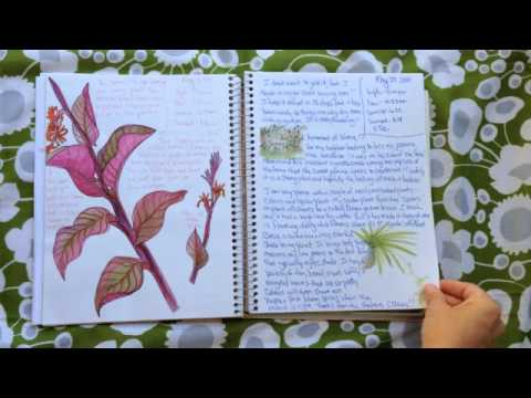 Journal Flip: My 1st official nature journal, pt 2