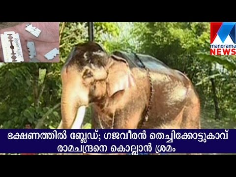 Attempt to kill elephant thechikottukavu ramachandran | Manorama News