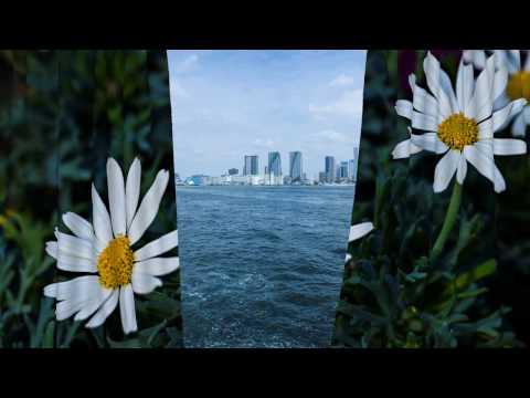 Tokyo Nature Photos