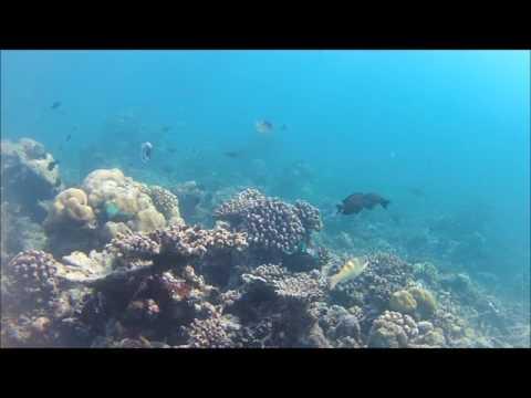 Maldives Grand Sud janvier/février 2017