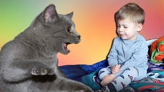 Озорной котёнок атакует  Мальчик и котёнок  Кто кого победит? Приколы с кошками