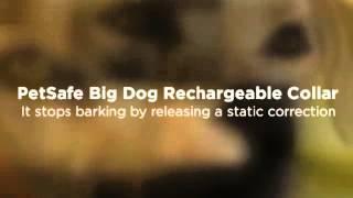 Small Dog Bark Collar