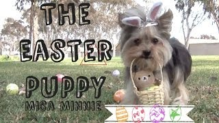 The Easter Puppy Misa Minnie