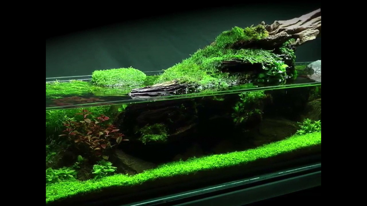 Simplicity Aquascape Preview (full video coming soon ...