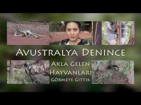 Avustralya Denince Akla Gelen Hayvanları Görmeye Gittik