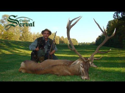 Perfect shot - Hunting Red Deer