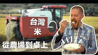 台灣米 : 看台灣農夫怎麼收割,非常療癒 (Amazing Taiwan Rice Harvesting)