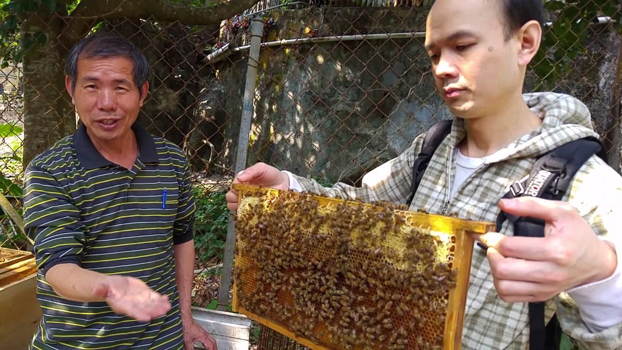 沙田 永和蜜蜂場 意大利蜜蜂 - YouTube