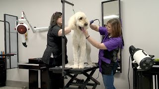 Sublime Pet Spa and Cleveland Grooming Academy