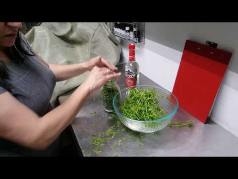 How to make a Cleavers Tincture (backyard medicine)