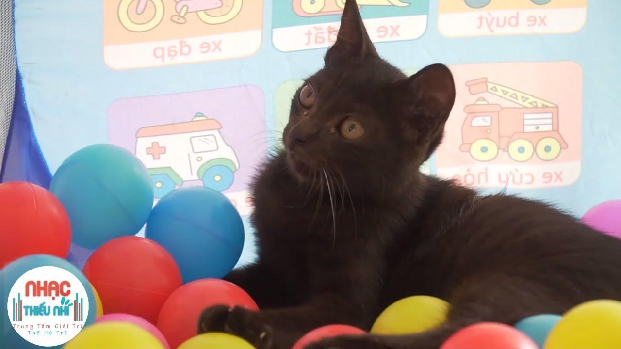 Ai Cũng Yêu Chú Mèo ❤️ Rửa Mặt Như Mèo ❤️ Chú Mèo Con ❤️ Nhạc Thiếu Nhi Vui Nhộn Hay Nhất