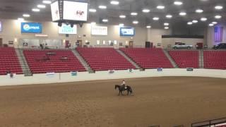 aqha level 1 championship ranch riding