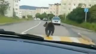 Wild chase Cops pursue a bear in Russias Far East