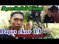 Pikat Perkutut Lokal Perkutut Satrio Pemanah Ekor  Terciduk  Mp3 - Mp4 Download