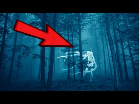 10 Most Haunted Forests to Avoid
