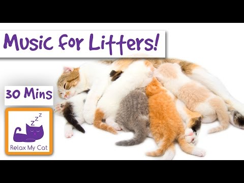 Music for New Litters of Kittens and their Mums! Soothing Music for New Cat Mums and their Babies