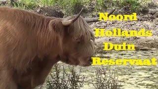 Heemskerk, duinen, strand,camping de berenweide.