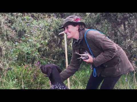 Shooting over a  Novice German Shorthaired Pointer