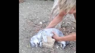 おいバカやめろ!「石にかじりついても」を具現化した猫