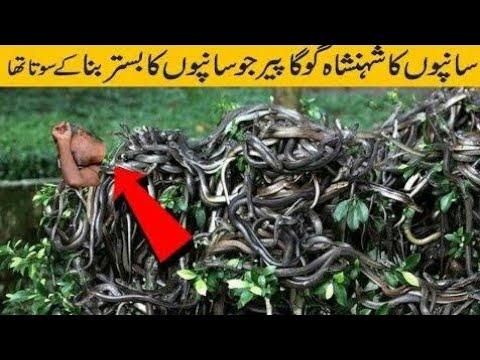 Guga Peer// Guga Peer Sleep With Snake Evry Night -Guga Peer Real Story