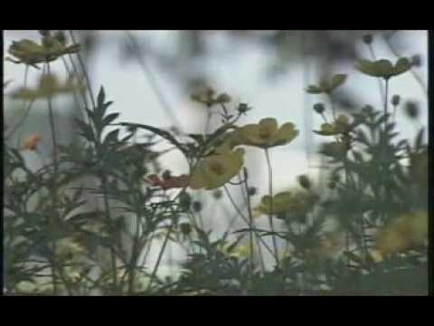 Nhung bong hoa trong vuon bac