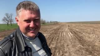 видео Как вырастить кориандр,как вырастить кинзу, технология выращивания