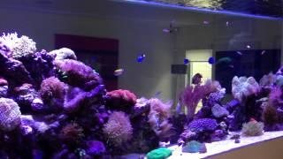 3000x1000x1000 In Wall Custom Reef Display Aquarium By Pristine Aquariums