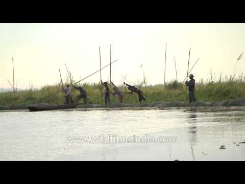 Canoes being used for fishing and navigation purposes in Loktak lake, Manipur