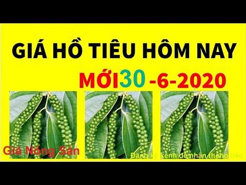 Giá tiêu 26/7, Giá Hồ Tiêu hôm nay ngày 26 tháng 7 năm 2020 from YouTube · Duration:  2 minutes 1 seconds