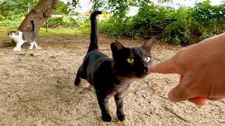 恐る恐るモフられに来る野良猫がカワイイ