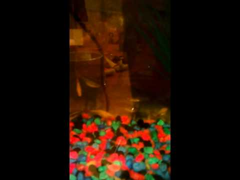 Plenty Of Fish Dating Video