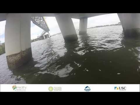 Brisbane River Fish Habitats