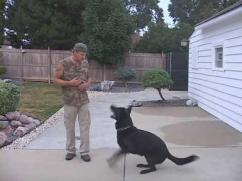 Trained Personal Protection Dogs Provided By Ultimate K9