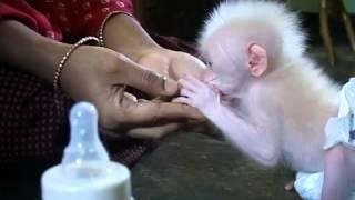 Обаятельная обезьянка!