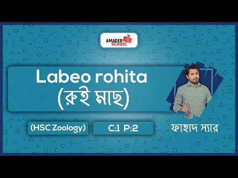 Labeo Rohita | রুই মাছ | HSC Zoology Chapter 2 | Part 1 | Fahad Sir