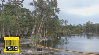 Giant sinkhole swallows trees in Assumption Parish, Louisiana - Truthloader