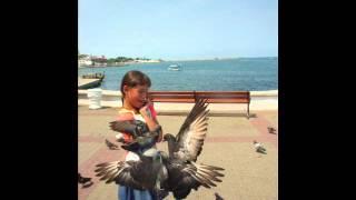 Песня  и клип про голубей