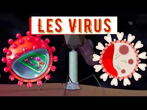 Les Virus ( L'hépatite B,la grippe,...) et Les prions