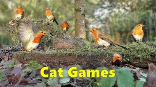 Cat Games  Where's The Birdie  A Game for Cats Only  Watch at Home with Your Cat