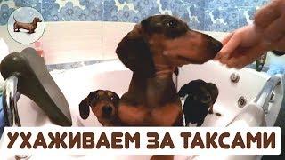 🐶 Таксы ➠ Уход за таксой (после прогулки по снегу)! Таксе зимой согреваем лапы в ванной :))