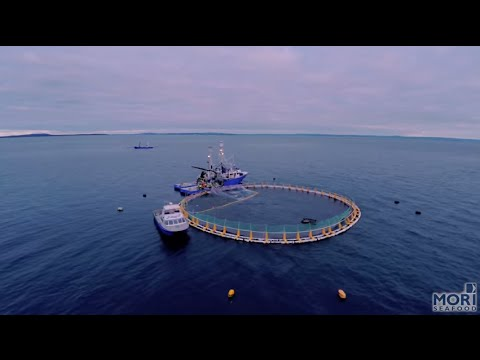 Mori Seafood, Eyre Peninsula
