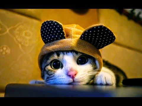 Funny cats video | Died laughing with the lovely humor of the cat, Try not to laugh (Part 10)